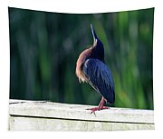 Green Heron Calling Softly In The Early Morning Tapestry