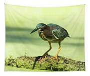Green Heron In Green Algae Tapestry