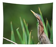 Green Heron Watches Tapestry