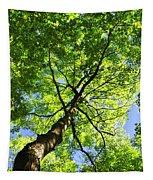 Summer Tree Canopy Tapestry