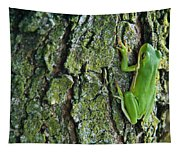 Green Tree Frog On Lichen Covered Bark Tapestry