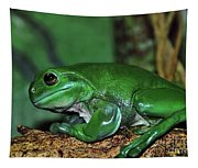 Green Tree Frog With A Smile Tapestry