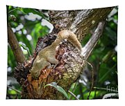Grey Bellied Squirrel Tapestry
