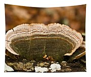 Grey Bracket Fungi Tapestry