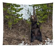 Grizzly Shaking A Tree Tapestry
