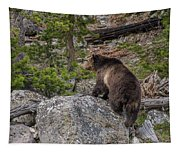 Grizzly Sow In Yellowstone Park Tapestry