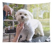 Grooming The Neck Of Adorable White Dog Tapestry