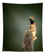 Ground Agama Sunbathing Tapestry