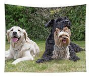 Group Of Three Dogs Tapestry
