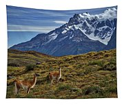 Guanacos In Patagonia Tapestry