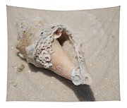 Gulf Of Mexico Shell Tapestry