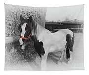 Gypsy Horse Tapestry
