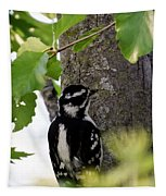 Downy Woodpecker 01 Tapestry