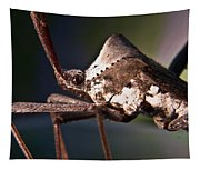 Handsome Bug Tapestry