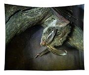 Hanging Big Eared Bat Tapestry