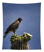 Harris Hawk Atop A Saguaro  Tapestry