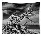 Haunting Beauty Tapestry
