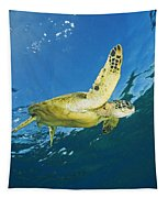 Hawaii, Green Sea Turtle Tapestry