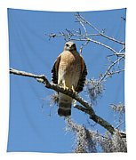 Hawk Eye Contact Tapestry