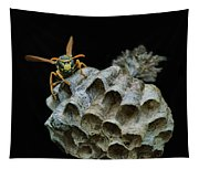 Head-on - Paper Wasp - Nest Tapestry