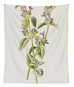 Hedge Calamint  Tapestry