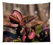 Heliborus Early Flower Buds 2 Tapestry