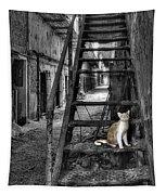 Here Kitty Kitty Kitty... Tapestry