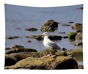 Herring Gull At Charmouth Tapestry