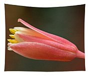 Hesperaloe Parviflora - False Agave Tapestry