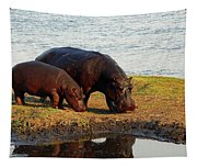 Hippo Mother And Child - Botswana Africa Tapestry