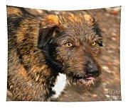 Homeless Dog Charlick Tapestry