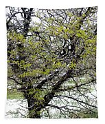 Honey Locust Tree On A Spring Snow Day Tapestry