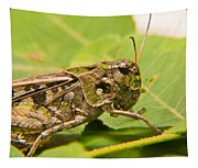 Hopper Face To Face Tapestry
