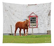 Horse At Panmure Island Lighthouse 5756 Tapestry