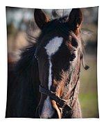 Horse Whispering Tapestry