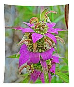 Horsemint On Trail To North Beach Park In Ottawa County, Michigan Tapestry