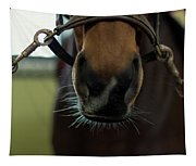 Horse Whiskers Tapestry