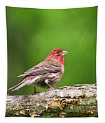 House Finch Perched Tapestry