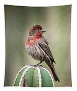 House Finch Perched On Cactus  Tapestry