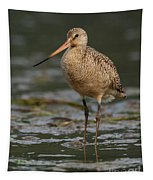 Marbled Godwit Stroll Tapestry