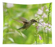 Hummer And Obedient Plant Tapestry