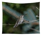 Hummingbird On A Twig Tapestry