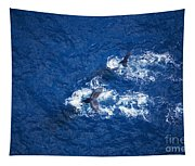 Humpback Whales Aerial Tapestry