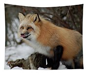 Hungry Fox Tapestry