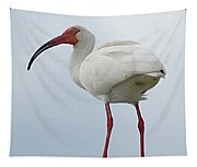 Ibis In The Morning Tapestry