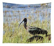 Ibis Looking Around Tapestry