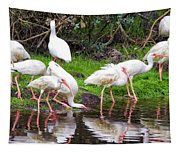 Ibis Reflections Tapestry