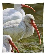Ibis Three Tapestry