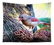 Img_0311 - Northern Cardinal Tapestry