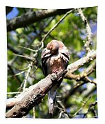 Img_7276 - Mourning  Dove Tapestry